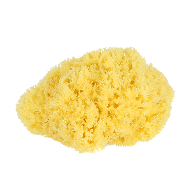 Hydrea Honeycomb Sea Sponge 6-7 inch